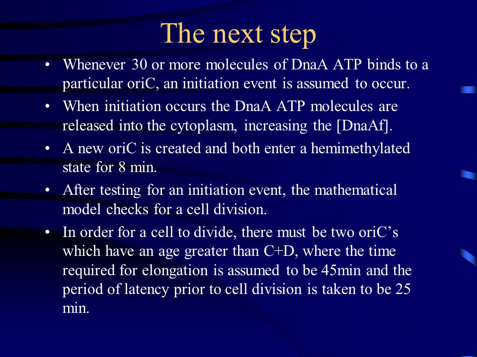 The next step Whenever 30 or more molecules of DnaA ATP binds to a particular oriC, an initiation event is assumed to occur.