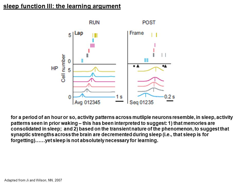 sleep function III: the learning argument Adapted from Ji and Wilson, NN, 2007 for a period of an hour or so, activity patterns across mutliple neuron