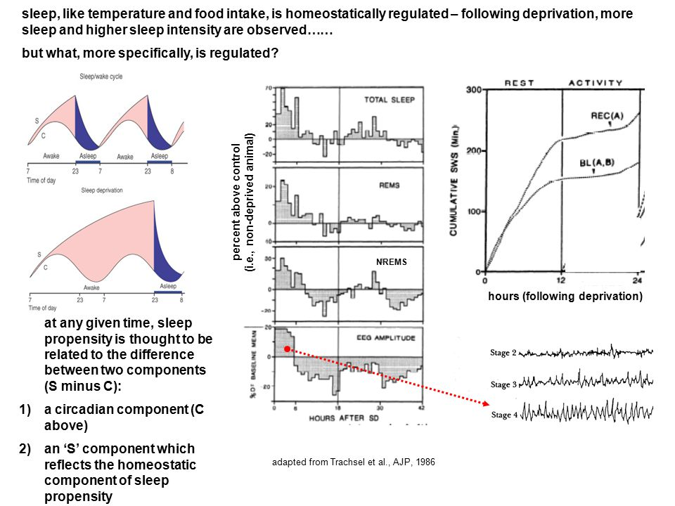 adapted from Trachsel et al., AJP, 1986 hours (following deprivation) sleep, like temperature and food intake, is homeostatically regulated – followin