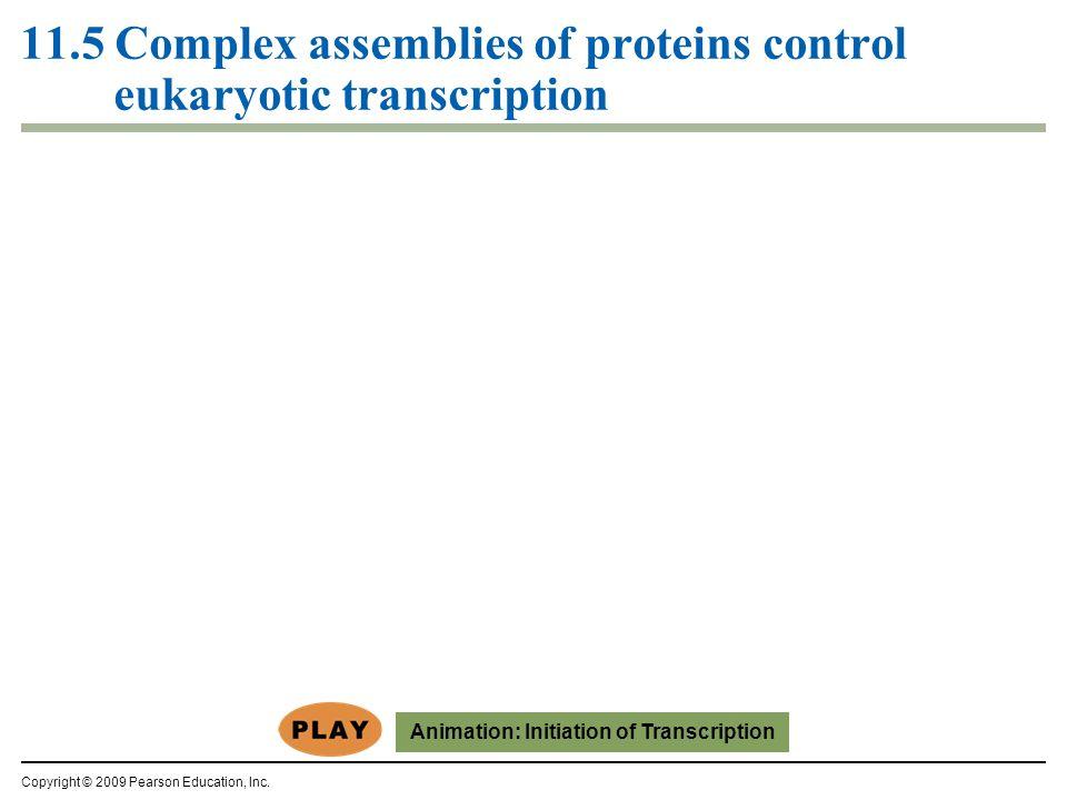 11.5 Complex assemblies of proteins control eukaryotic transcription Copyright © 2009 Pearson Education, Inc.