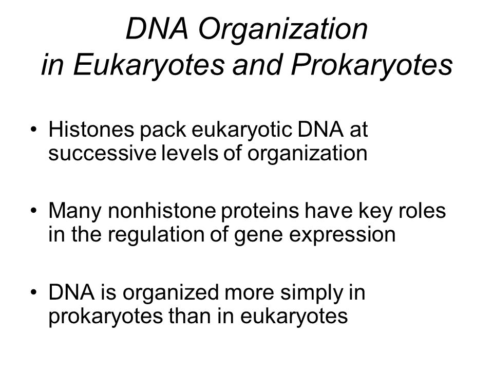 DNA Organization in Eukaryotes and Prokaryotes Histones pack eukaryotic DNA at successive levels of organization Many nonhistone proteins have key roles in the regulation of gene expression DNA is organized more simply in prokaryotes than in eukaryotes