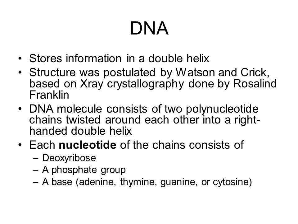 Fig.16-3b, p. 332 Transcription occurs b.