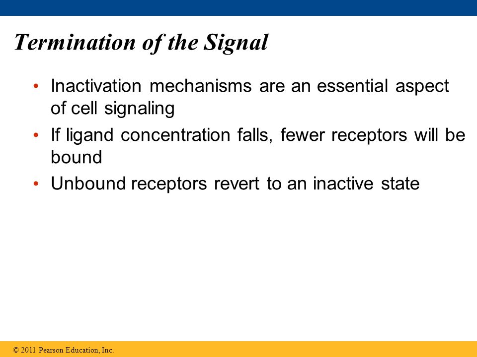 Termination of the Signal Inactivation mechanisms are an essential aspect of cell signaling If ligand concentration falls, fewer receptors will be bou