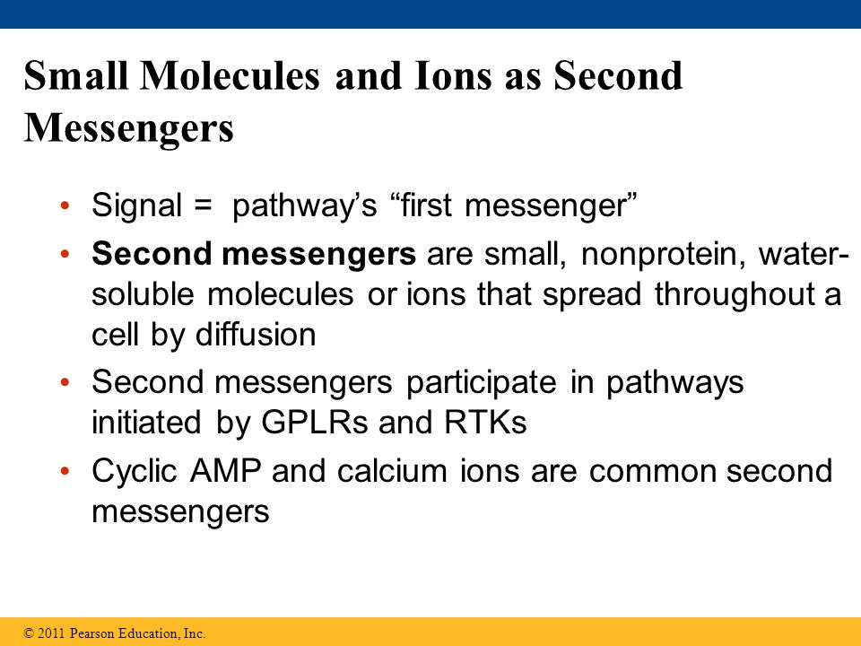 """Small Molecules and Ions as Second Messengers Signal = pathway's """"first messenger"""" Second messengers are small, nonprotein, water- soluble molecules o"""