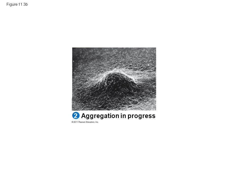 Figure 11.3b Aggregation in progress 2