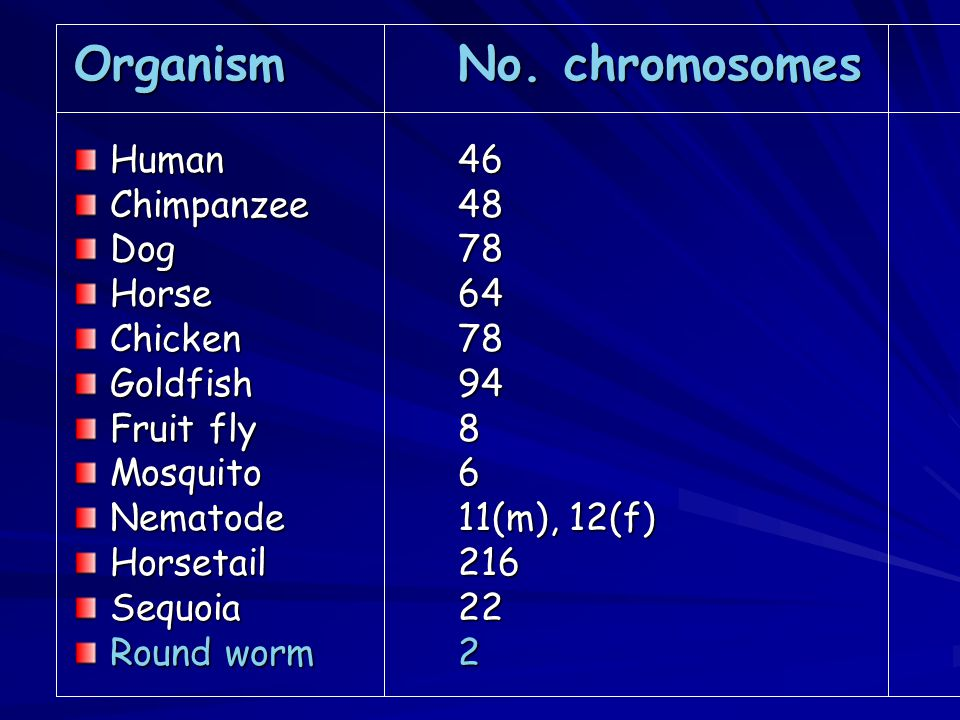 Characteristics of eukaryotic chromosome - found in the nucleus of a cell.