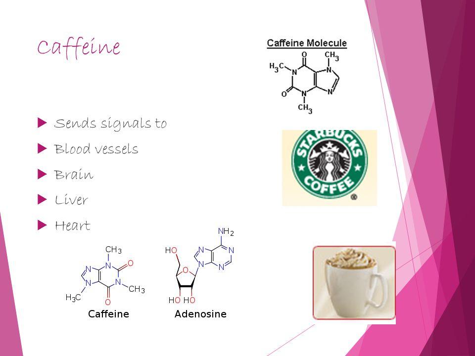 Caffeine  Sends signals to  Blood vessels  Brain  Liver  Heart