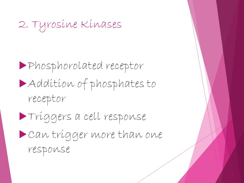 2. Tyrosine Kinases  Phosphorolated receptor  Addition of phosphates to receptor  Triggers a cell response  Can trigger more than one response
