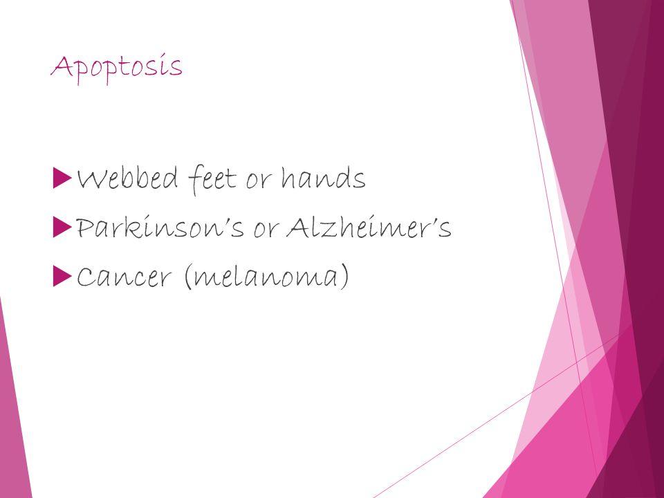 Apoptosis  Webbed feet or hands  Parkinson's or Alzheimer's  Cancer (melanoma)
