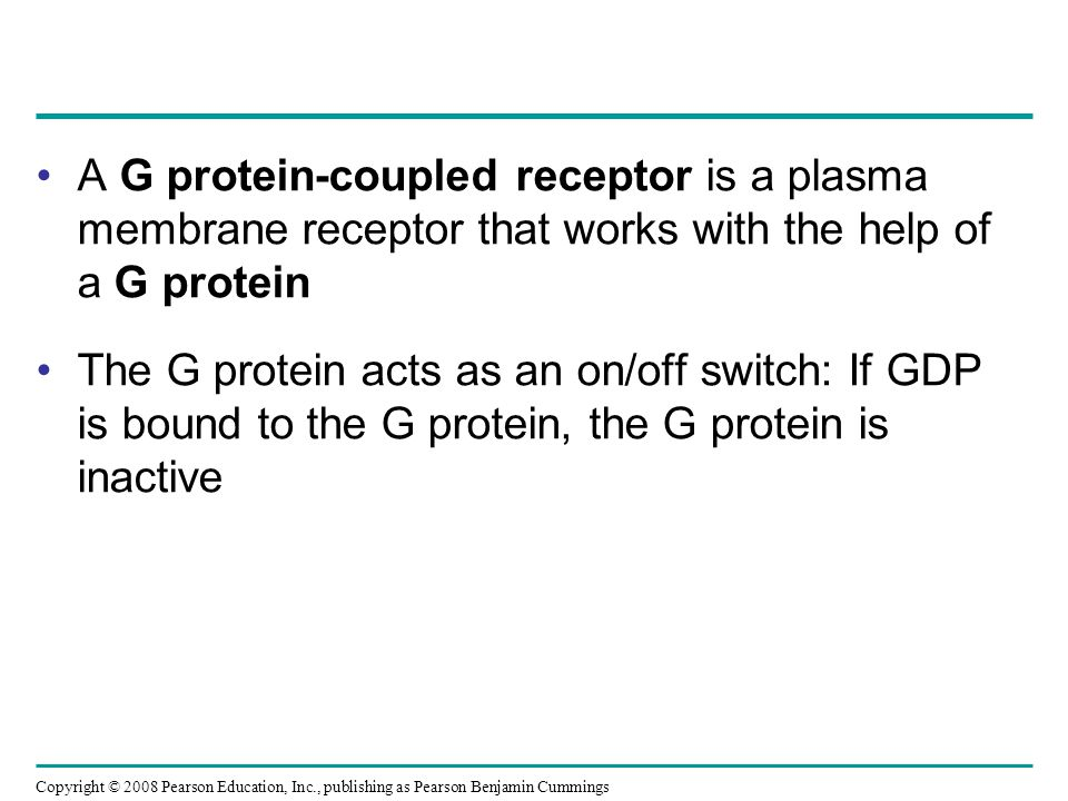 A G protein-coupled receptor is a plasma membrane receptor that works with the help of a G protein The G protein acts as an on/off switch: If GDP is b