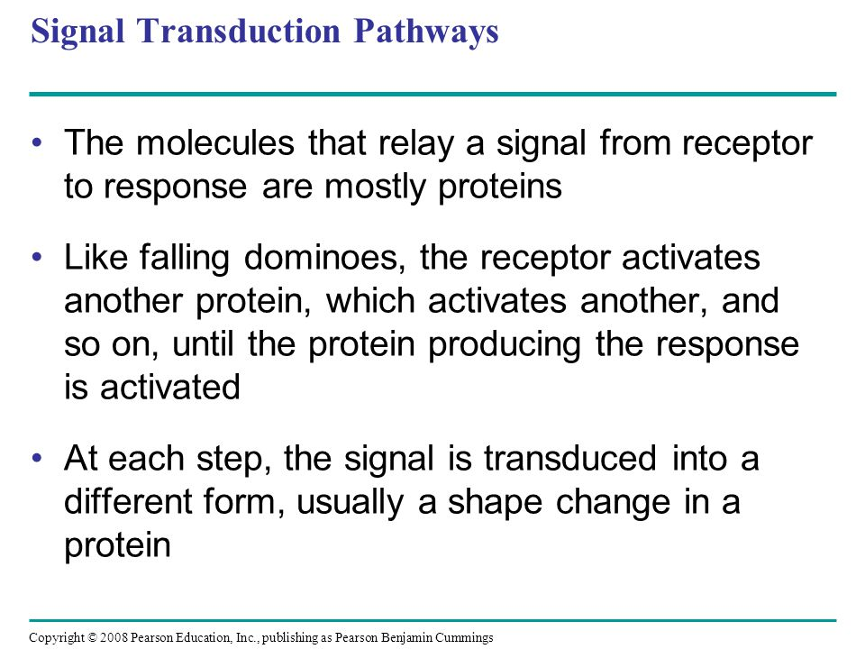 Signal Transduction Pathways The molecules that relay a signal from receptor to response are mostly proteins Like falling dominoes, the receptor activ