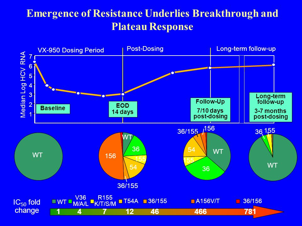 36 155 54 36/155 WT 156 36 155 WT VX-950 Dosing Period Post-Dosing Emergence of Resistance Underlies Breakthrough and Plateau Response Long-term follow-up Median Log HCV RNA 1 2 3 4 5 6 7 EOD 14 days Baseline Follow-Up 7/10 days post-dosing Long-term follow-up 3-7 months post-dosing WT V36 M/A/L R155 K/T/S/M T54A 36/155A156V/T36/156 IC 50 fold change 1 4 7 12 46 466 781 36 155 54 36/155 WT 156