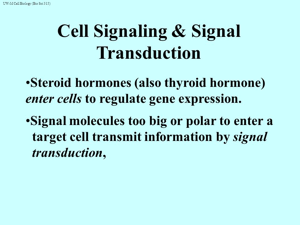 UW-M Cell Biology (Bio Sci 315) Signal transduction themes: 2nd messengers & protein phosphorylation extracellular signal intracellular second messenger Signal Transduction …binds to inactive protein kinase activated protein kinase phosphatase ATP Pi ADP