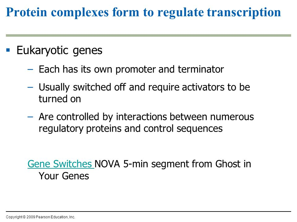Protein complexes form to regulate transcription  Eukaryotic genes –Each has its own promoter and terminator –Usually switched off and require activators to be turned on –Are controlled by interactions between numerous regulatory proteins and control sequences Gene Switches Gene Switches NOVA 5-min segment from Ghost in Your Genes Copyright © 2009 Pearson Education, Inc.