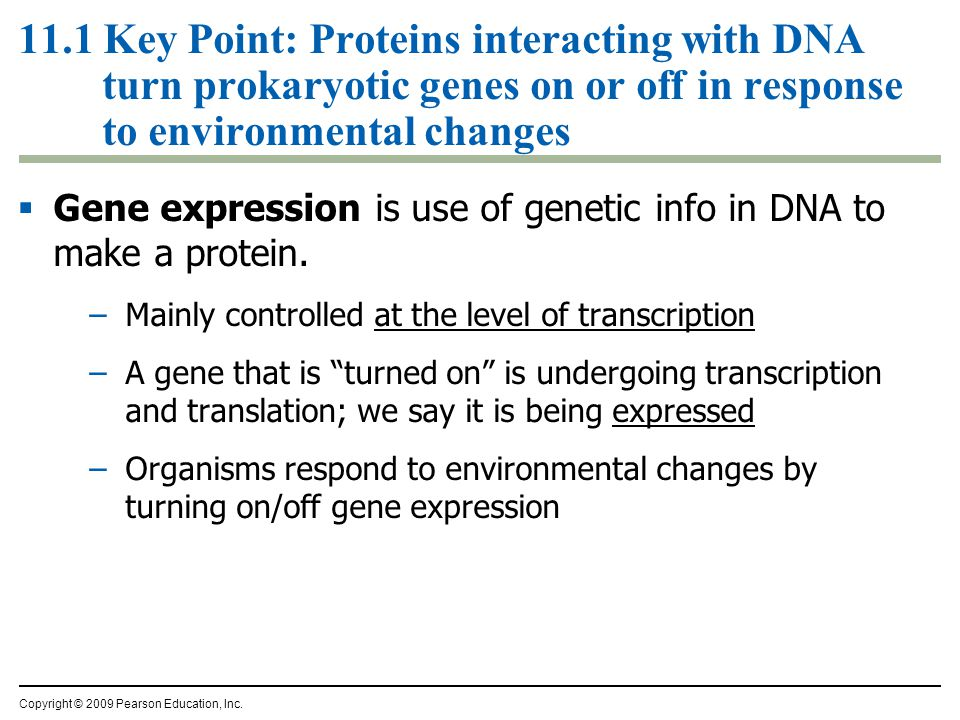  Gene expression is use of genetic info in DNA to make a protein.