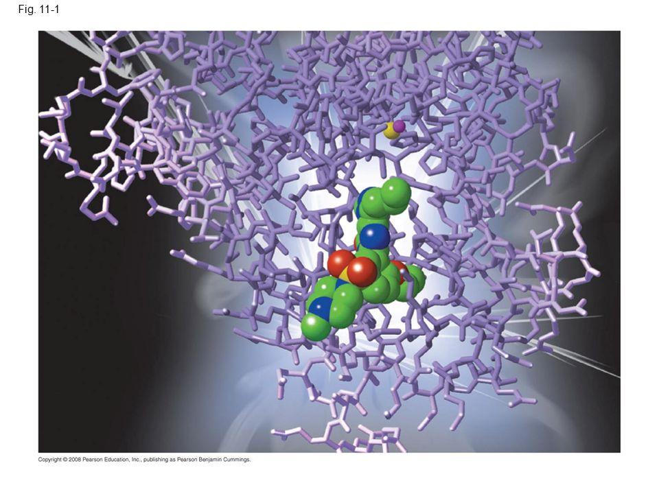 Fig.11-17 Signaling molecule Receptor Relay molecules Response 1 Cell A.