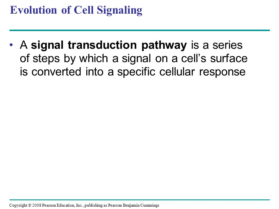 Signal Transduction Pathways The molecules that relay a signal from receptor to response are mostly proteins Like falling dominoes, the receptor activates another protein, which activates another, and so on, until the protein producing the response is activated At each step, the signal is transduced into a different form, usually a shape change in a protein Copyright © 2008 Pearson Education, Inc., publishing as Pearson Benjamin Cummings