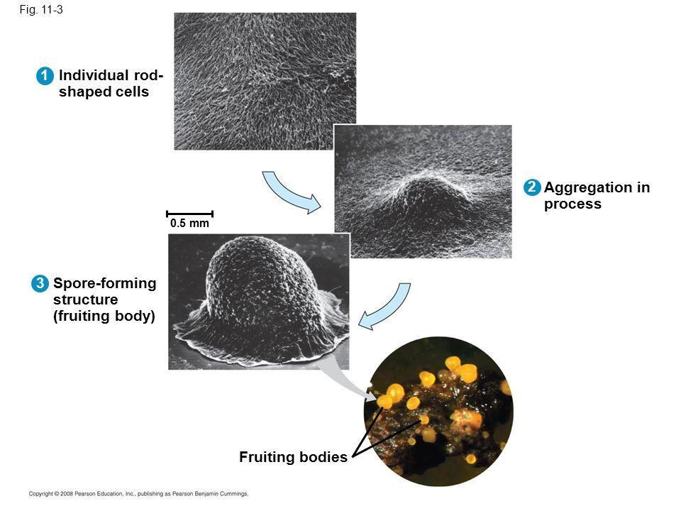 Fig. 11-19 2 µm