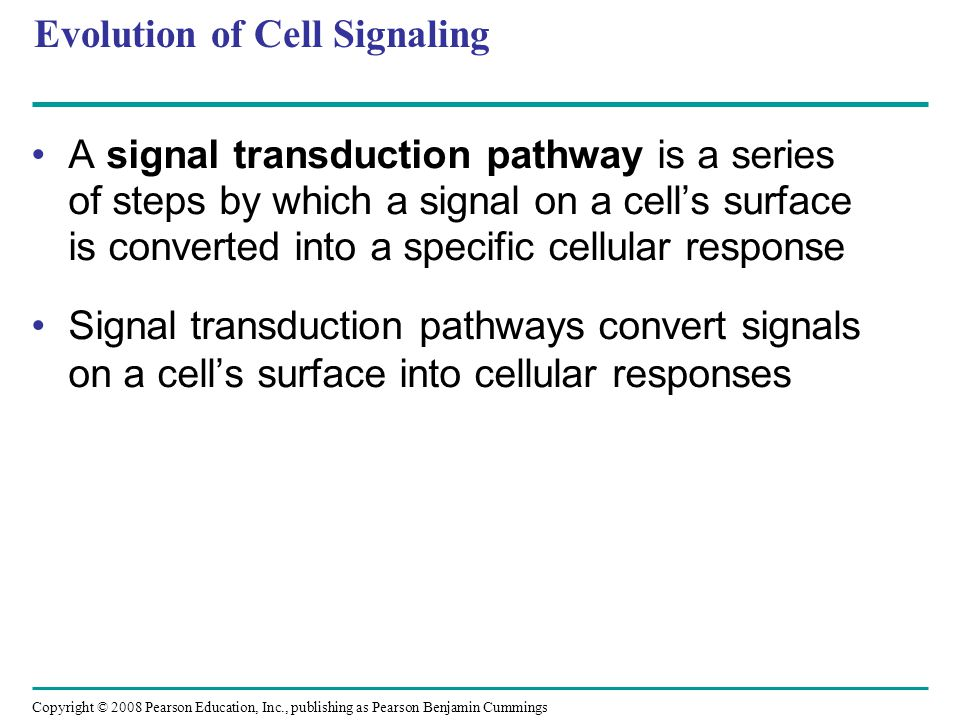 The Specificity of Cell Signaling and Coordination of the Response Different kinds of cells have different collections of proteins These different proteins allow cells to detect and respond to different signals Even the same signal can have different effects in cells with different proteins and pathways Pathway branching and cross-talk further help the cell coordinate incoming signals Copyright © 2008 Pearson Education, Inc., publishing as Pearson Benjamin Cummings
