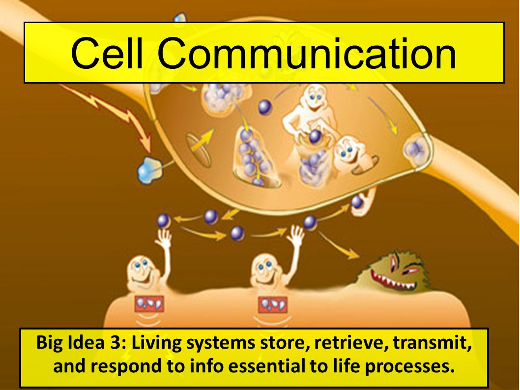 Cell Communication Big Idea 3: Living systems store, retrieve, transmit, and respond to info essential to life processes.