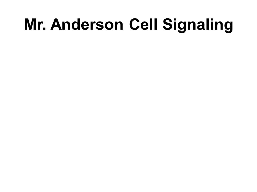 Mr. Anderson Cell Signaling