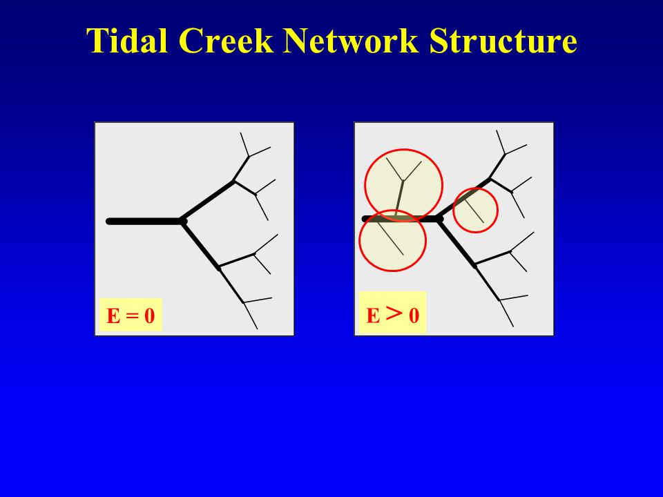 Tidal Creek Network Structure E = 0 E > 0