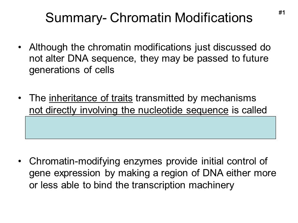 Summary- Chromatin Modifications Although the chromatin modifications just discussed do not alter DNA sequence, they may be passed to future generations of cells The inheritance of traits transmitted by mechanisms not directly involving the nucleotide sequence is called epigenetic inheritance Chromatin-modifying enzymes provide initial control of gene expression by making a region of DNA either more or less able to bind the transcription machinery #1