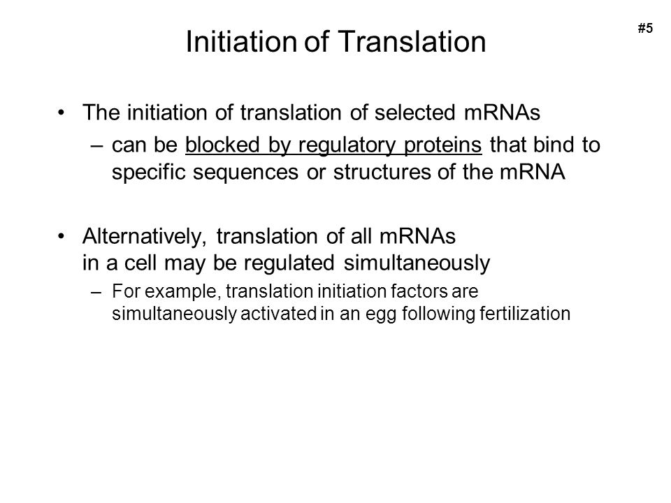 Initiation of Translation The initiation of translation of selected mRNAs –can be blocked by regulatory proteins that bind to specific sequences or structures of the mRNA Alternatively, translation of all mRNAs in a cell may be regulated simultaneously –For example, translation initiation factors are simultaneously activated in an egg following fertilization #5