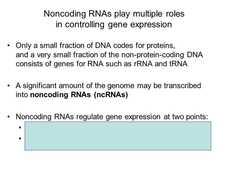 Noncoding RNAs play multiple roles in controlling gene expression Only a small fraction of DNA codes for proteins, and a very small fraction of the non-protein-coding DNA consists of genes for RNA such as rRNA and tRNA A significant amount of the genome may be transcribed into noncoding RNAs (ncRNAs) Noncoding RNAs regulate gene expression at two points: mRNA translation chromatin configuration