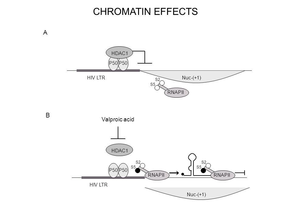 HIV LTR RNAPII S5 S2 Valproic acid HIV LTR RNAPII S5 S2 HDAC1 RNAPII S5 S2 A B P50 HDAC1 Nuc-(+1) CHROMATIN EFFECTS