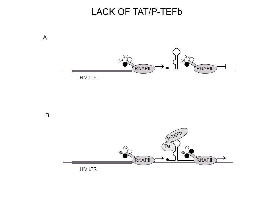 HIV LTR RNAPII S5 S2 RNAPII S5 S2 P-TEFb Tat A B RNAPII S5 S2 RNAPII S5 S2 LACK OF TAT/P-TEFb
