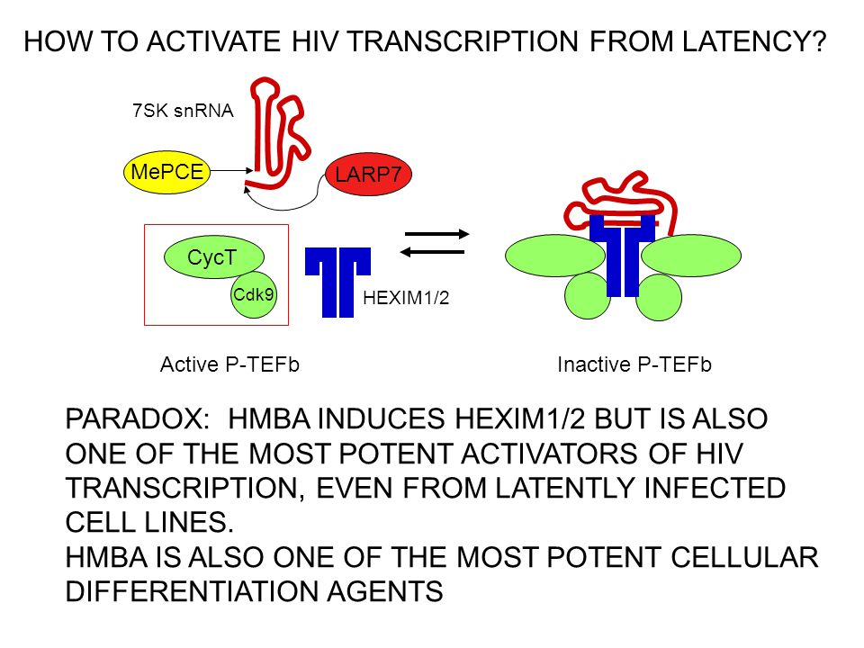 PARADOX: HMBA INDUCES HEXIM1/2 BUT IS ALSO ONE OF THE MOST POTENT ACTIVATORS OF HIV TRANSCRIPTION, EVEN FROM LATENTLY INFECTED CELL LINES.