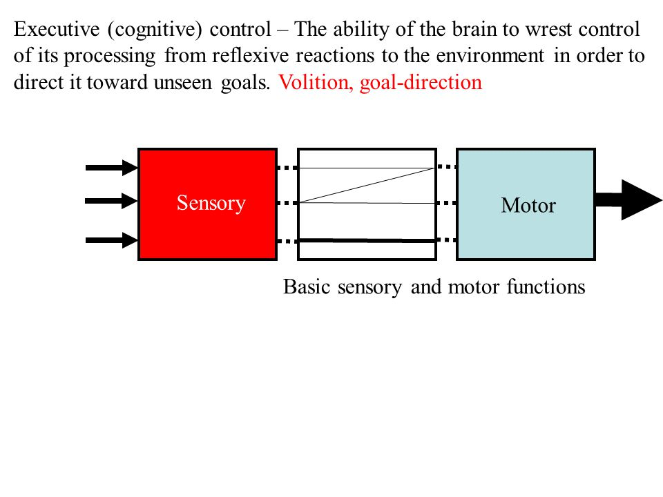 Sensory Motor Learning and memory (Hippocampus, basal ganglia, etc.) Executive Functions goal-related information Top-down Consolidation (long-term storage) Selection (flexibility)