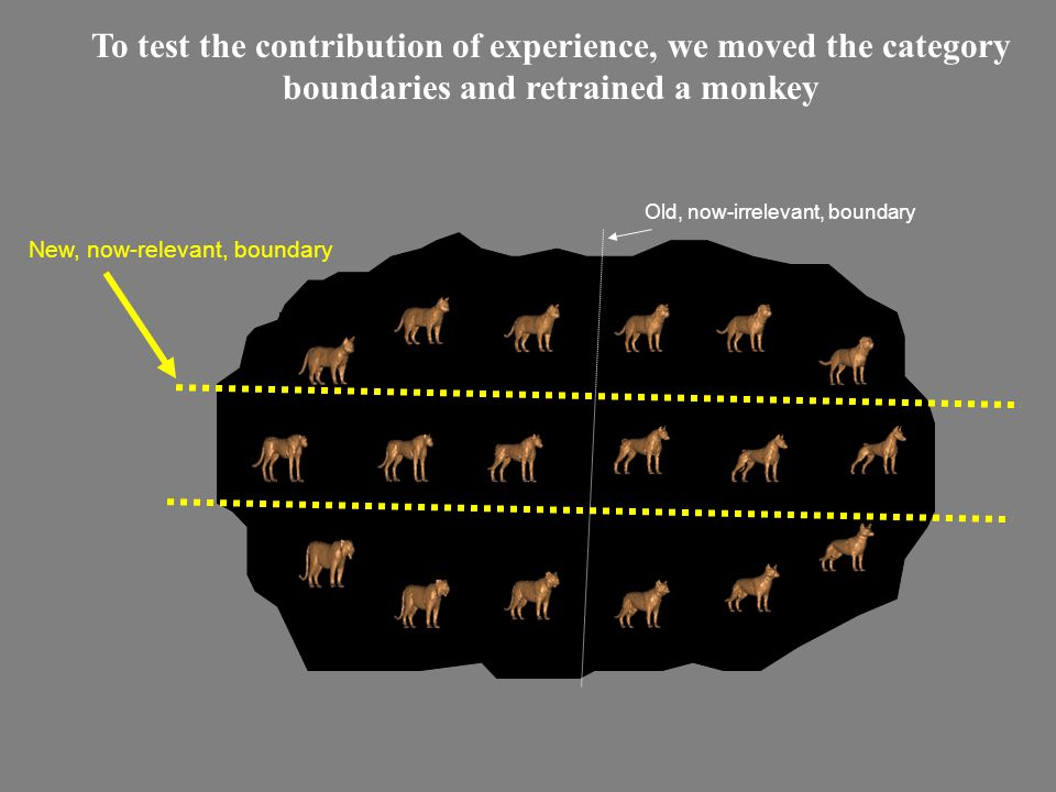 To test the contribution of experience, we moved the category boundaries and retrained a monkey Old, now-irrelevant, boundary New, now-relevant, boundary