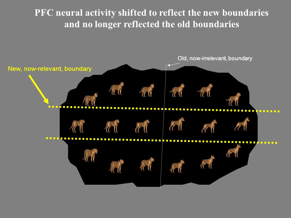 PFC neural activity shifted to reflect the new boundaries and no longer reflected the old boundaries Old, now-irrelevant, boundary New, now-relevant, boundary