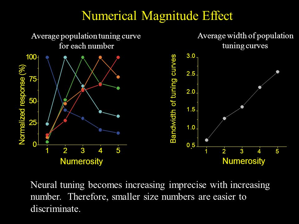 Numerical Magnitude Effect 12345 05 1.0 1.5 2.0 2.5 3.0 Bandwidth of tuning curves Average population tuning curve for each number Neural tuning becomes increasing imprecise with increasing number.