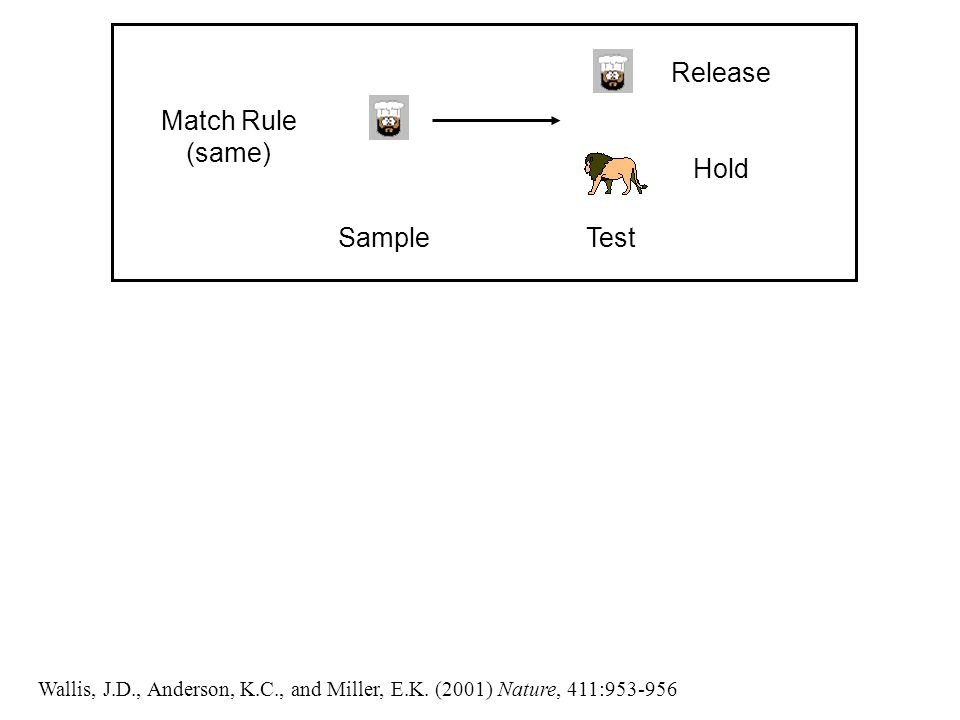Release Hold Match Rule (same) SampleTest Wallis, J.D., Anderson, K.C., and Miller, E.K.