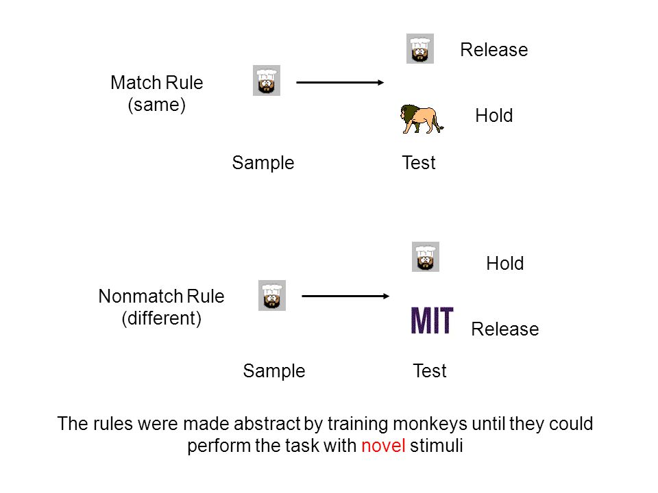 Sample Test Release Hold The rules were made abstract by training monkeys until they could perform the task with novel stimuli Match Rule (same) Nonmatch Rule (different) Hold Release