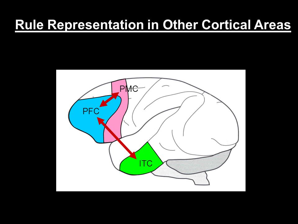Rule Representation in Other Cortical Areas PFC ITC PMC