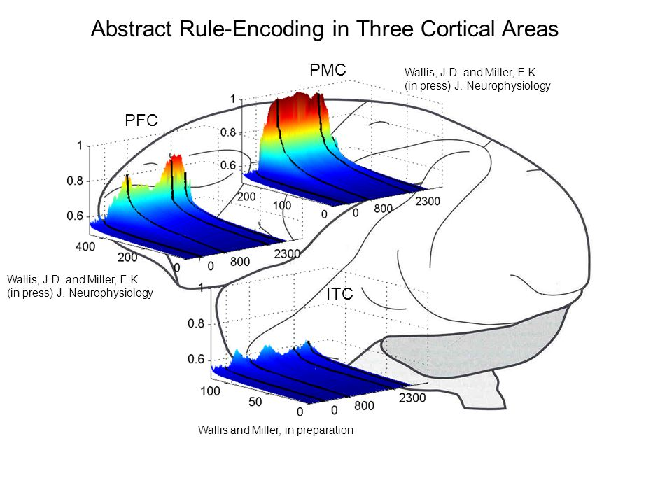 Abstract Rule-Encoding in Three Cortical Areas PFC ITC PMC Wallis and Miller, in preparation Wallis, J.D.