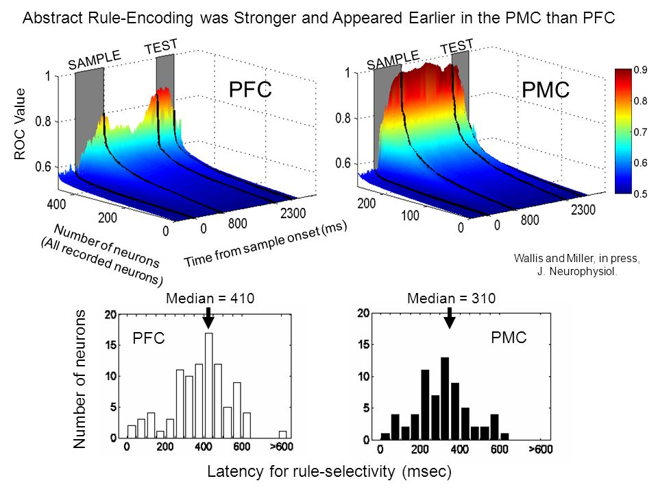 Abstract Rule-Encoding was Stronger and Appeared Earlier in the PMC than PFC SAMPLE TEST PMC SAMPLE TEST ROC Value Number of neurons (All recorded neurons) Time from sample onset (ms) PFC Latency for rule-selectivity (msec) Number of neurons Median = 410Median = 310 PFC PMC Wallis and Miller, in press, J.