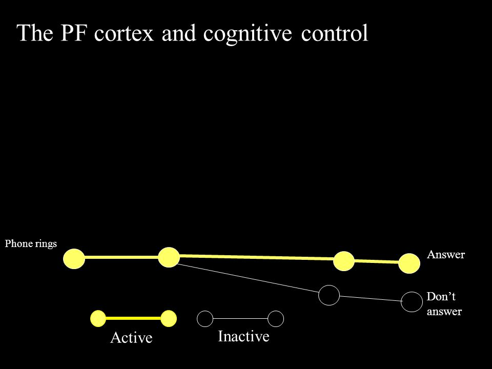 Active Inactive The PF cortex and cognitive control Phone rings Answer Don't answer