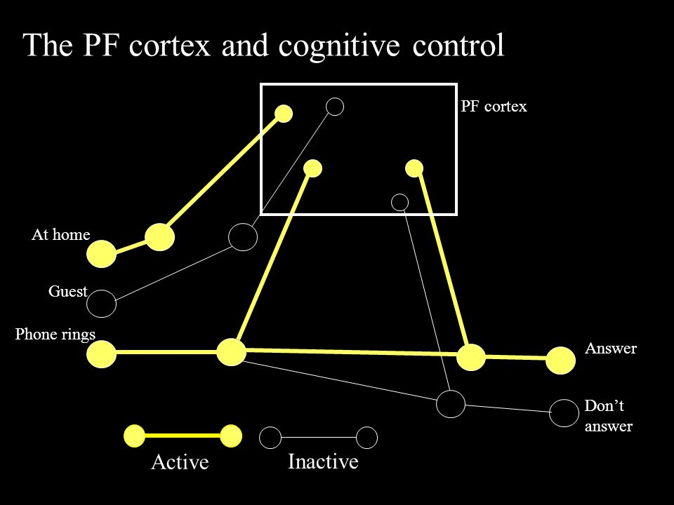 Active Inactive The PF cortex and cognitive control Phone rings Answer Don't answer At home Guest PF cortex