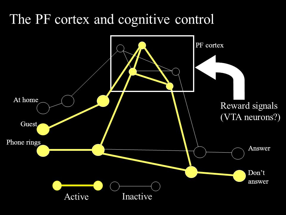 Active Inactive The PF cortex and cognitive control Phone rings Answer Don't answer At home Guest PF cortex Reward signals (VTA neurons )