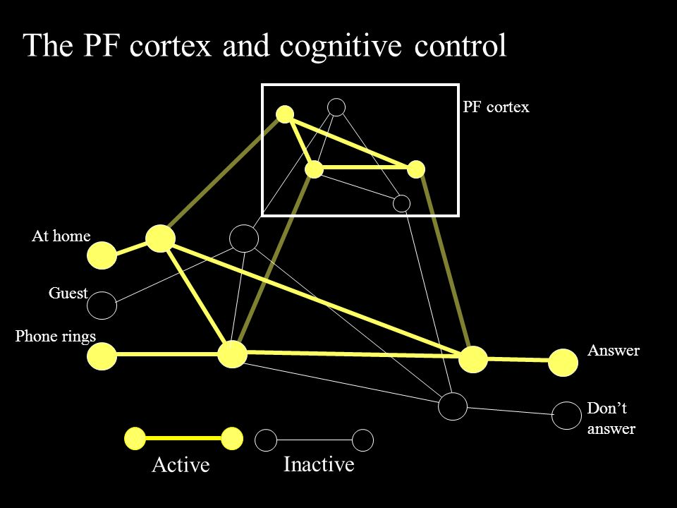 Active Inactive The PF cortex and cognitive control Answer Don't answer PF cortex At home Guest Phone rings