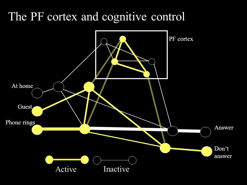 Active Inactive The PF cortex and cognitive control Answer Don't answer PF cortex Phone rings Guest At home