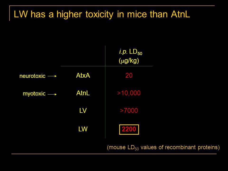 i.p. LD 50 (  g/kg) AtxA20 AtnL>10,000 LV>7000 LW2200 LW has a higher toxicity in mice than AtnL neurotoxic myotoxic (mouse LD 50 values of recombina