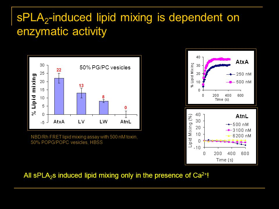 NBD/Rh FRET lipid mixing assay with 500 nM toxin, 50% POPG/POPC vesicles, HBSS All sPLA 2 s induced lipid mixing only in the presence of Ca 2+ .