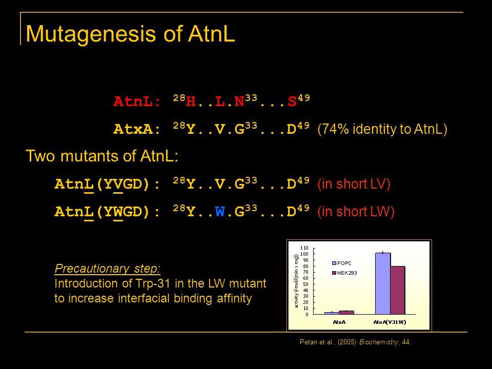Mutagenesis of AtnL AtnL: 28 H..L.N 33...S 49 AtxA: 28 Y..V.G 33...D 49 (74% identity to AtnL) Two mutants of AtnL: AtnL(YVGD): 28 Y..V.G 33...D 49 (in short LV) AtnL(YWGD): 28 Y..W.G 33...D 49 (in short LW) Petan et al., (2005) Biochemistry, 44.