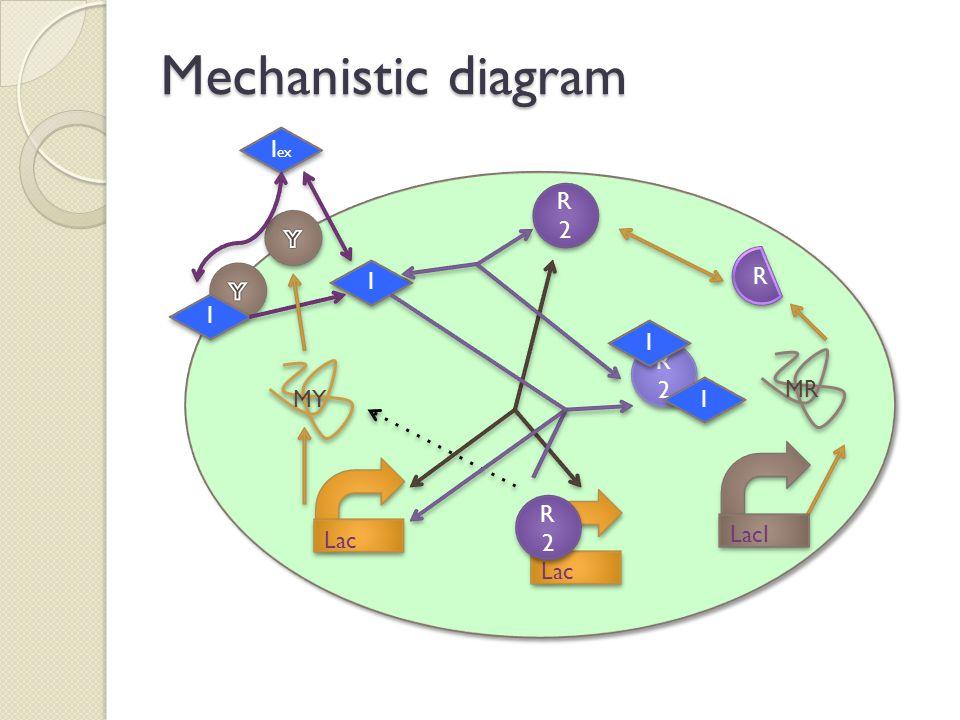 Mechanistic diagram I I Lac I ex I I MR R R R2R2 R2R2 LacI MY Lac R2R2 R2R2 R2R2 R2R2 I I I I